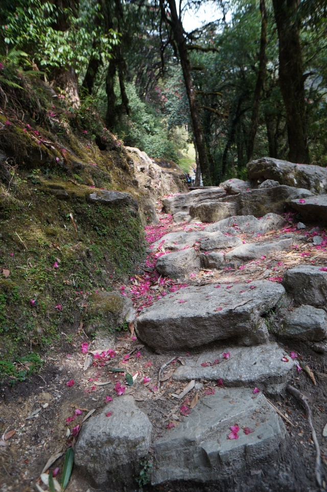 Stone steps and pink blossom