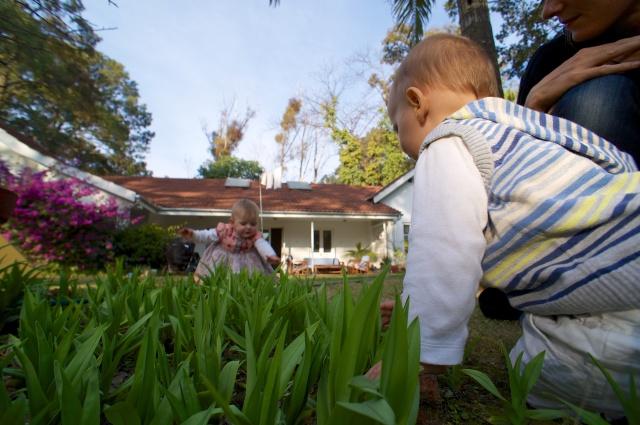 babies plants house
